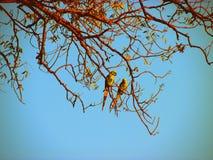 Couples des oiseaux verts Photos libres de droits