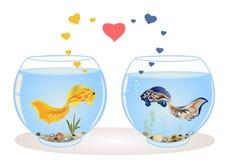 Couples des poissons dans l'amour Image libre de droits