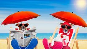 Couples drôles des chiens dans l'amour à la plage Photo libre de droits