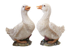 Couples of duck Stock Image