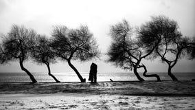 Couples et arbres Photos libres de droits