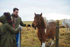 Couples et chevaux au-dessus de barrière Photographie stock