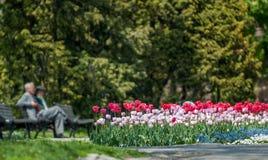 Couples et fleurs pluss âgé Photo libre de droits