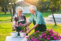 Couples et fleurs supérieurs de jardiniers Photographie stock