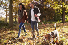 Couples exerçant le chien en Autumn Woodland photos libres de droits