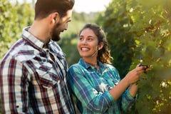 Couples fonctionnant dans le vignoble Photo libre de droits