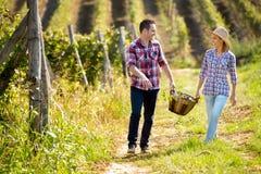 Couples heureux dans le vignoble énorme Photographie stock libre de droits