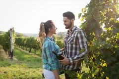 Couples heureux dans le vignoble avant la moisson Photos stock