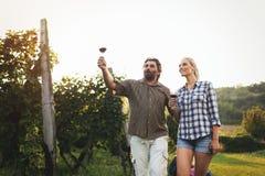 Couples heureux dans le vignoble avant la moisson Image stock
