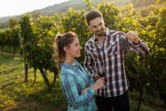Couples heureux dans le vignoble avant la moisson Image libre de droits