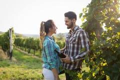 Couples heureux dans le vignoble avant la moisson Images libres de droits
