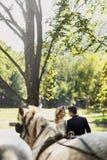 Couples heureux de mariage de conte de fées marchant en parc avec des chevaux Images stock
