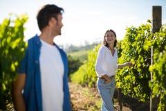 Couples heureux regardant l'un l'autre se tenant dans le vignoble Image stock