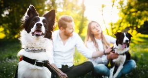 Couples heureux romantiques dans l'amour appréciant leur temps avec des animaux familiers en nature Photographie stock