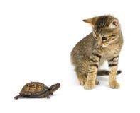 Couples impairs - chaton et tortue Photographie stock