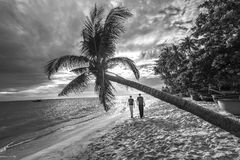 Couples lovers walk to the end of tropical beach Stock Photos
