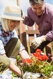 Couples mûrs heureux faisant du jardinage ensemble Photos stock