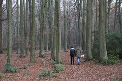 Couples marchant dans une forêt Images stock