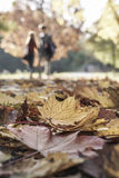 Couples marchant en parc en automne Photo stock