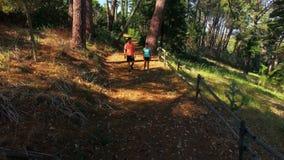 Couples marchant sur le chemin forestier banque de vidéos