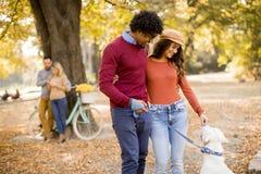 Couples multiraciaux marchant avec le chien en parc d'automne photos libres de droits