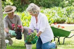 Couples occupés à faire du jardinage Images stock