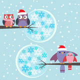 Couples of owls and birds winter Stock Image