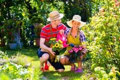 Couples plantant des fleurs dans le jardin Photos libres de droits