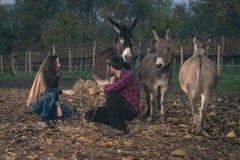 Couples prenant soin des ânes extérieurs Images stock