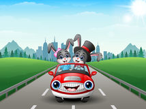 Couples rabbit cartoon driving a car on city background Royalty Free Stock Photo