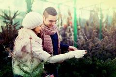 Couples recherchant l'arbre de nouvelle année Photos libres de droits