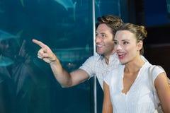 Couples regardant des poissons dans le réservoir Photographie stock libre de droits