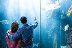 Couples regardant des poissons dans le réservoir Images stock
