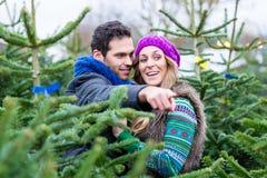 Couples regardant pour acheter des arbres de Noël Image stock