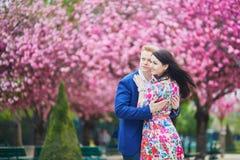 Couples romantiques à Paris avec des arbres de fleurs de cerisier Image stock
