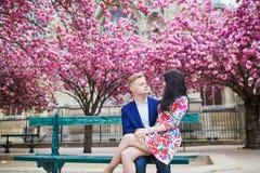 Couples romantiques à Paris avec des arbres de fleurs de cerisier Photos stock