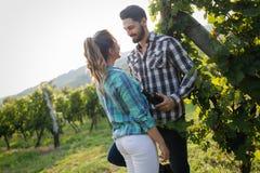 Couples romantiques dans le vignoble avant la moisson Images stock