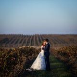 Couples romantiques de conte de fées des nouveaux mariés étreignant au coucher du soleil dans le domaine de vignoble Photos stock