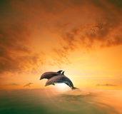 Couples of sea dophin jumping through ocean wave floating mid ai stock image
