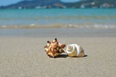 Couples shell on the beach Royalty Free Stock Image