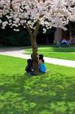 Couples sous un arbre Images stock