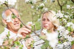 Couples supérieurs appréciant un moment dans leur jardin de floraison Photos stock