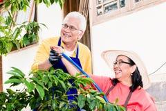 Couples supérieurs asiatiques souriant tandis que le vert de arrosage cultivait le plan Images stock