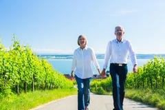 Couples supérieurs ayant la promenade dans le vignoble Photographie stock