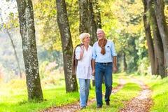 Couples supérieurs ayant la promenade de loisirs en bois Photographie stock