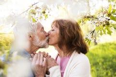 Couples supérieurs dans des baisers de nature d'extérieur d'amour au printemps Photo libre de droits