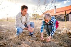 Couples supérieurs dans le jardin plantant des pommes de terre dans le sol Photographie stock libre de droits