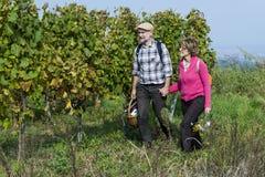 Couples supérieurs dans le vignoble Photographie stock