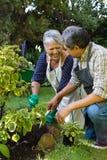 Couples supérieurs faisant du jardinage dans le jardin photos libres de droits