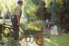Couples supérieurs faisant du jardinage dans le jardin image libre de droits